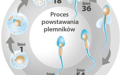 The process of spermatogenesis revealed
